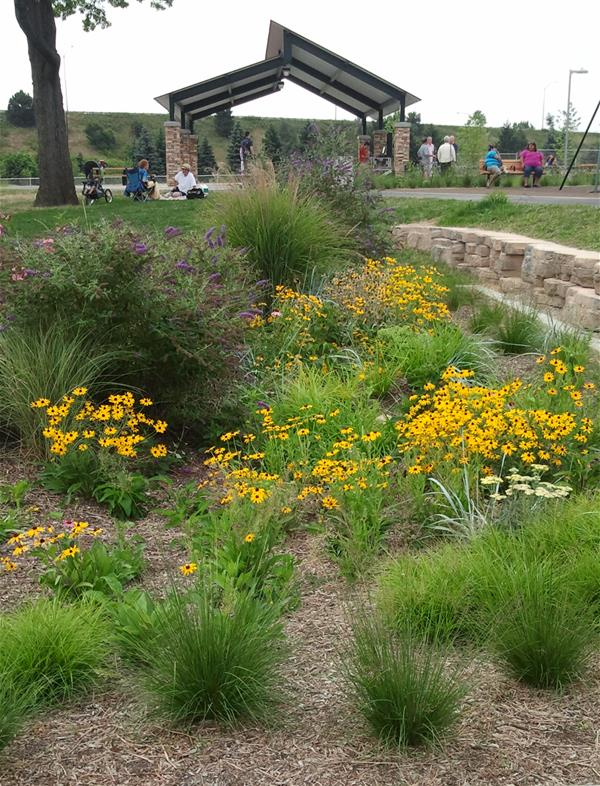 Recreation area with native swale plants